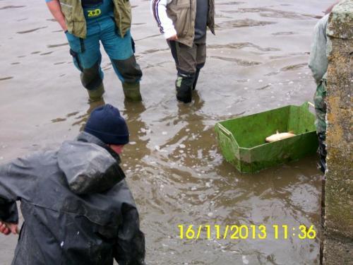 2013 - listopad - kontrolní výlov obecního rybníka