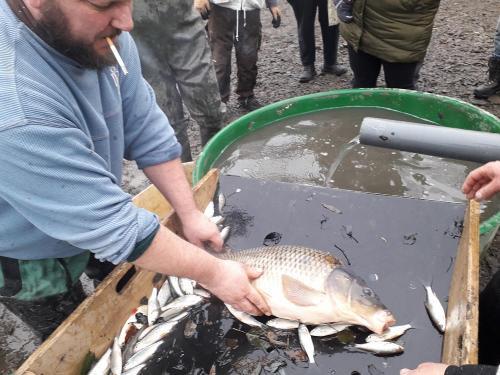 2019 - listopad - kontrolní výlov obecního rybníka